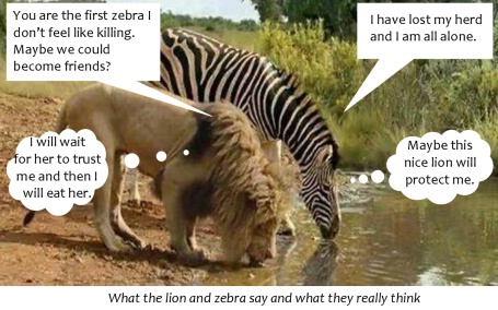 Zebra and lion talking2-0