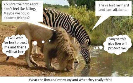 Zebra and lion talking2-0